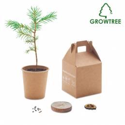 gadget ecologici semi pino kit scatola albero personalizzabile padova